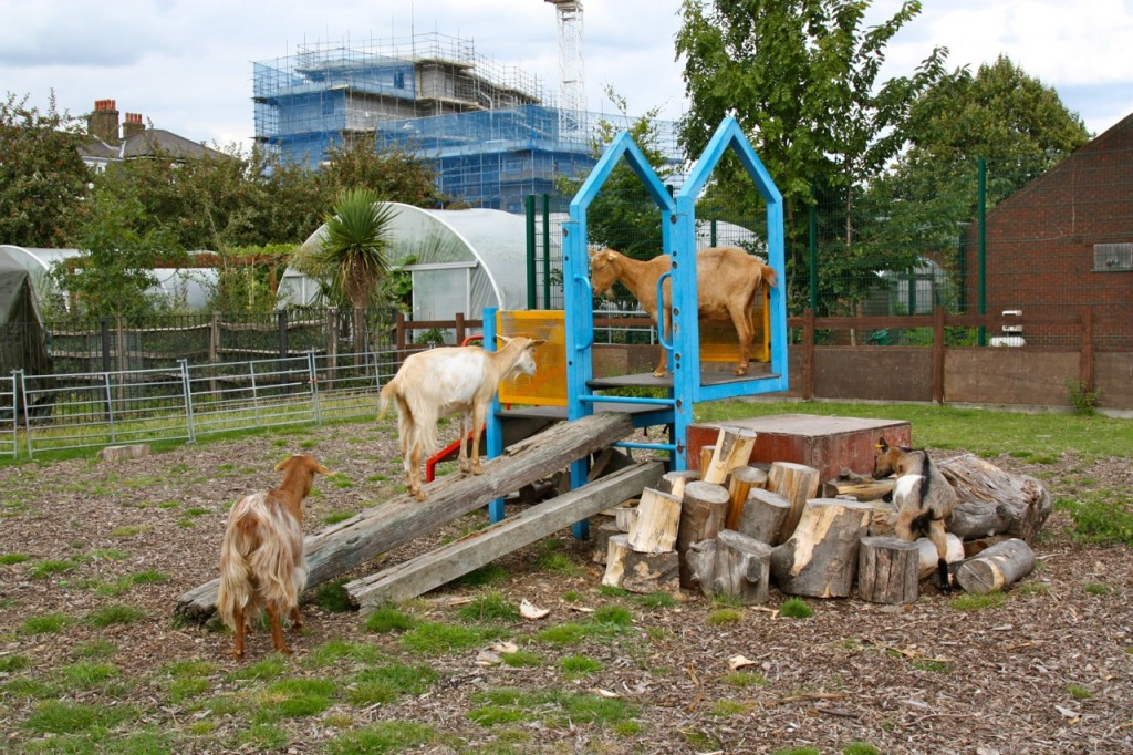 Spitalfields City Farm