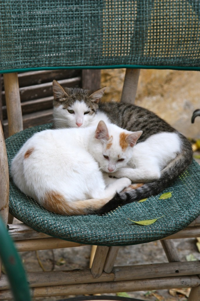 Cats of Athens by Stephanie Sadler