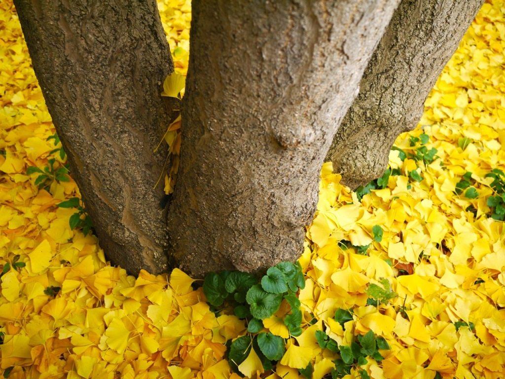 Autumn in London by Stephanie Sadler