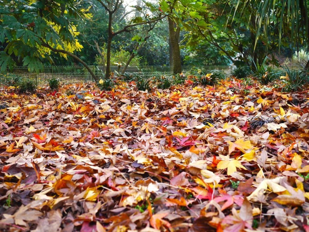 Autumn in London by Stephanie Sadler, Little Observationist