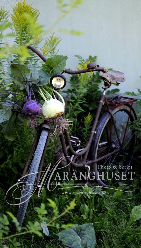 maranghouse. kale and bike 01