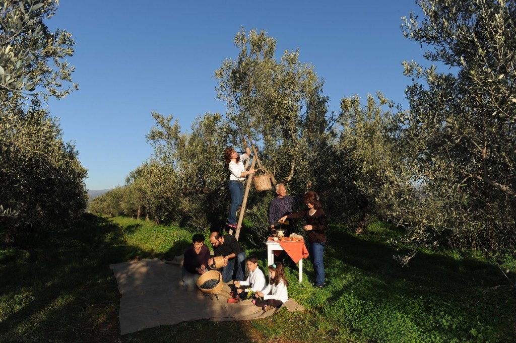 taken a couple of days before Christmas in our groves.Me, Jehny, Vasilis and Panayota , Jehny's Parents and my Mother..