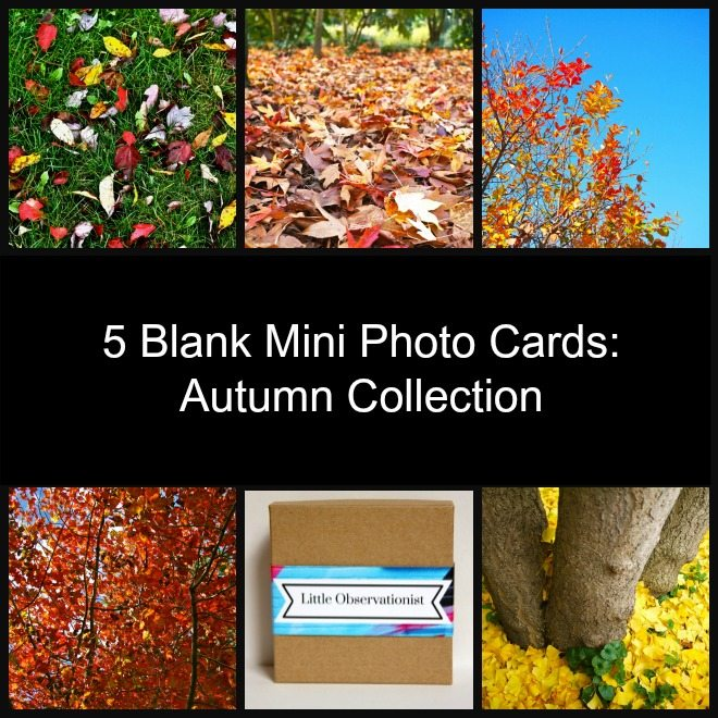 Little Observationist Mini Photo Cards - Autumn Collection