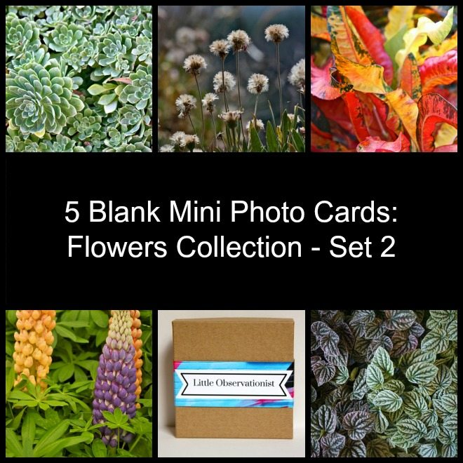 Little Observationist Mini Photo Cards - Flower Collection - Set 2