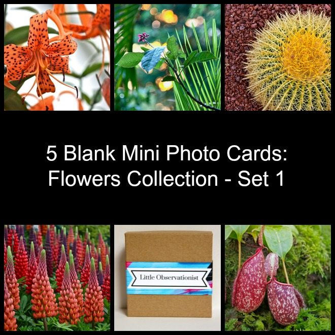Little Observationist Mini Photo Cards - Flowers Collection - Set 1