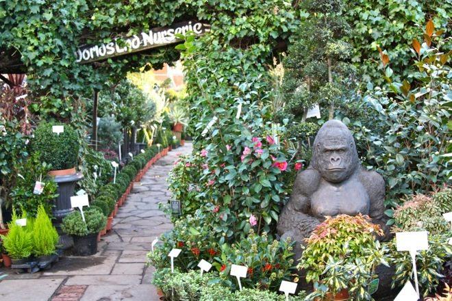 Little Observationist, World's End Nurseries, London