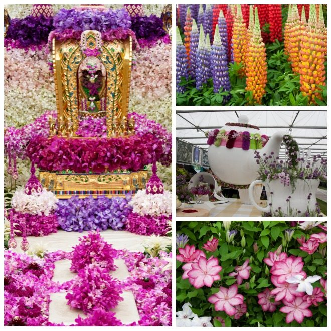 Chelsea Flower Show 2015 by Stephanie Sadler, Little Observationist 19.jpg