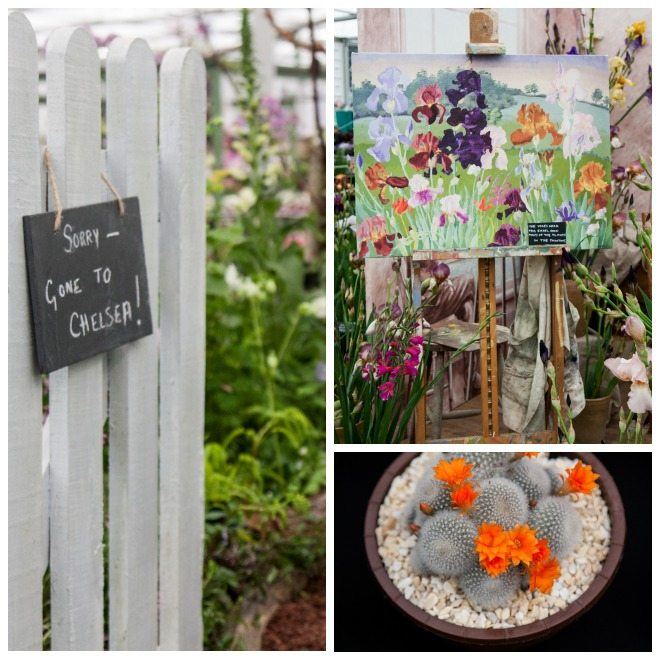 Chelsea Flower Show 2015 by Stephanie Sadler, Little Observationist 21.jpg