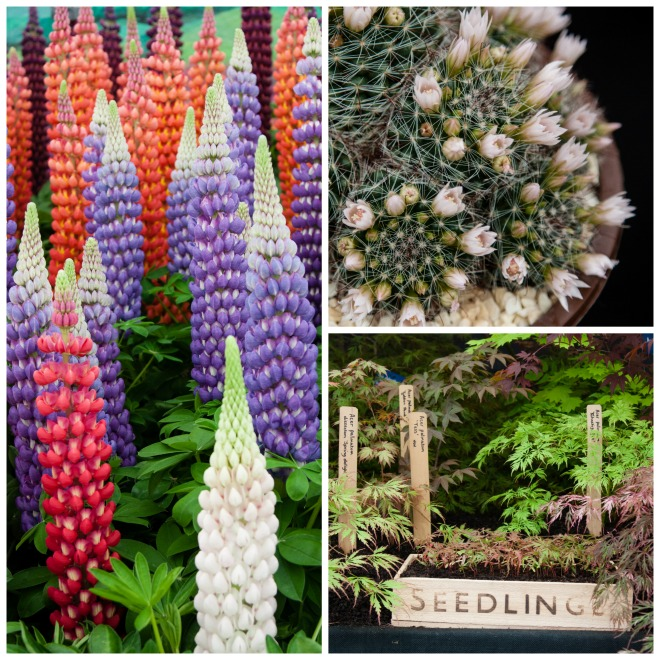 Chelsea Flower Show 2015 by Stephanie Sadler, Little Observationist18