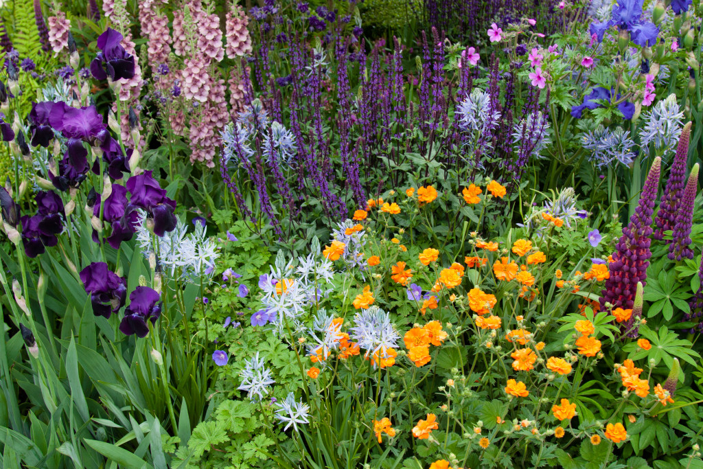 Chelsea Flower Show 2015 by Stephanie Sadler, Little Observationistt