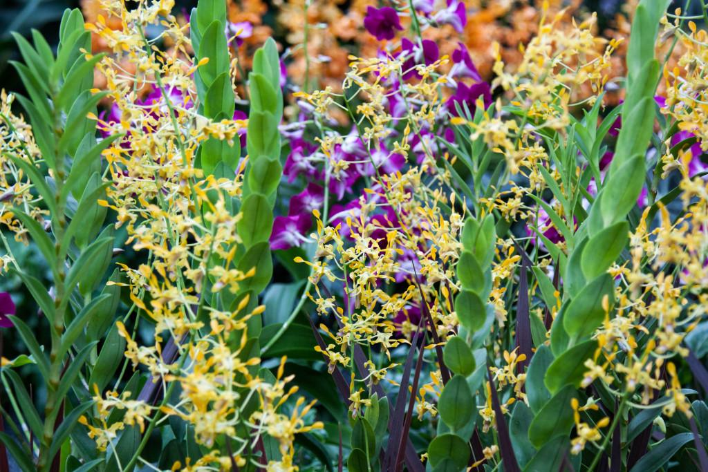 Chelsea Flower Show 2015 by Stephanie Sadler, Little Observationistt