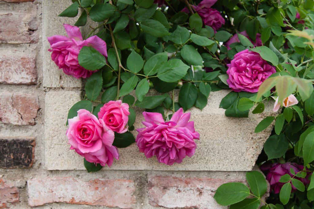 Chelsea Flower Show 2015 by Stephanie Sadler, Little Observationist