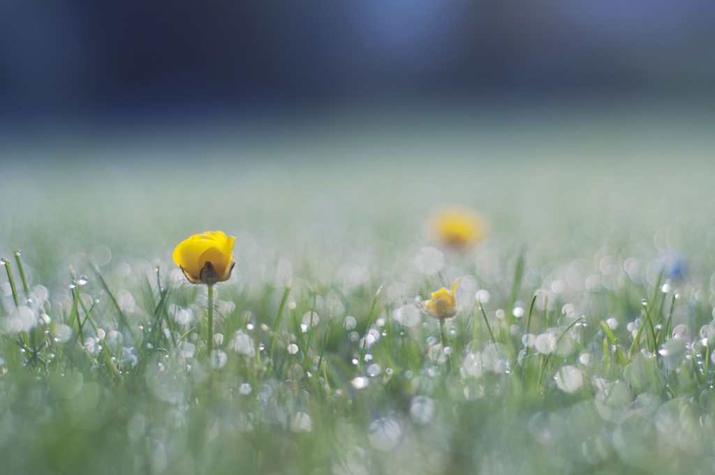 2 - Good Morning Buttercup by Ida Hollis via Little Observationist