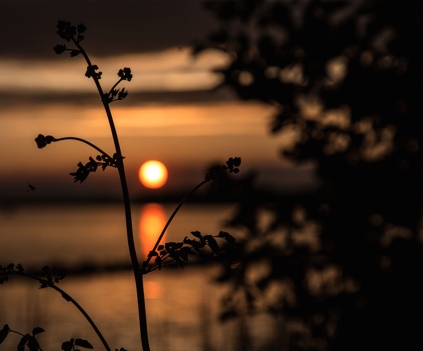 Sunset over the Niagara River by Stephanie Sadler, Little Observationist