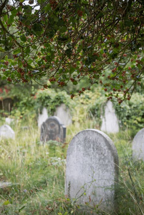 London Cemeteries by Stephanie Sadler, Little Observationist