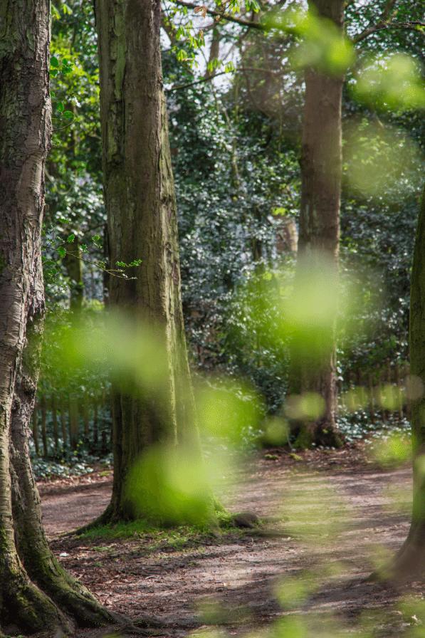 Holland Park by Stephanie Sadler, Little Observationist