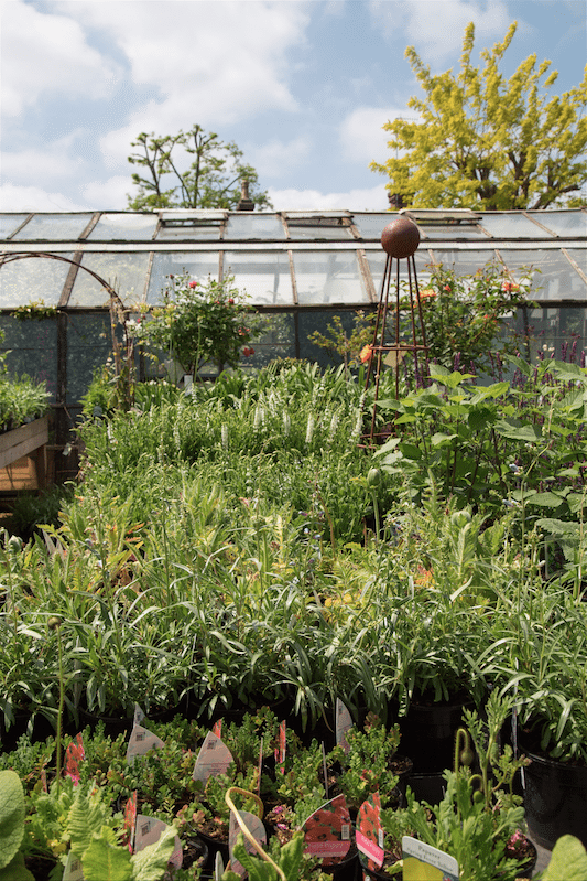 Petersham Nurseries, London by Stephanie Sadler, Little Observationist