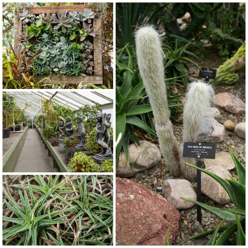 Buffalo Botanical Gardens by Stephanie Sadler, Little Observationist